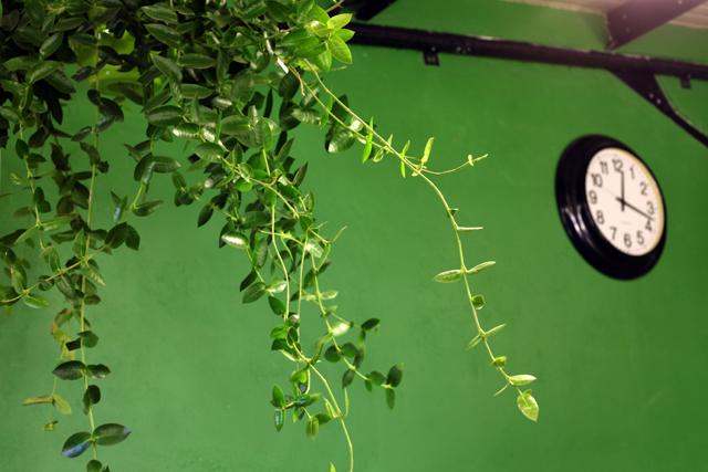 larive-plantes